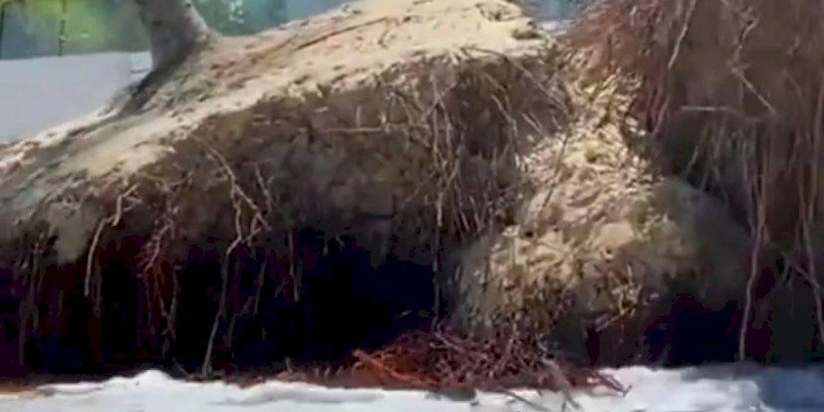 Impresionante vídeo de erosión costera en la playa de Ocean Park