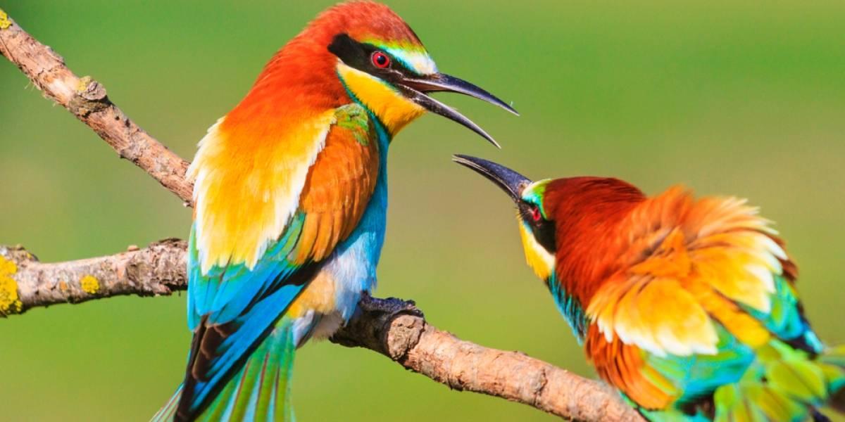 Encuentran animales que ya están cambiando su anatomía por el cambio climático
