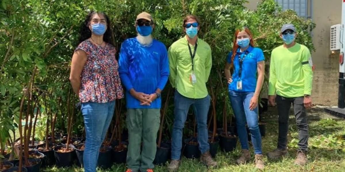 Bayer dona 456 árboles a reserva natural en Humedal Punta Tuna en Maunabo