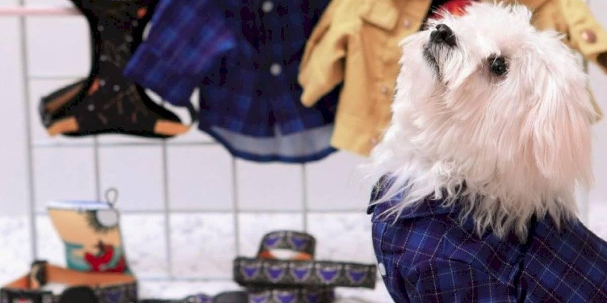 Toy Doggie presenta nueva colección de 'Halloween' para las mascotas