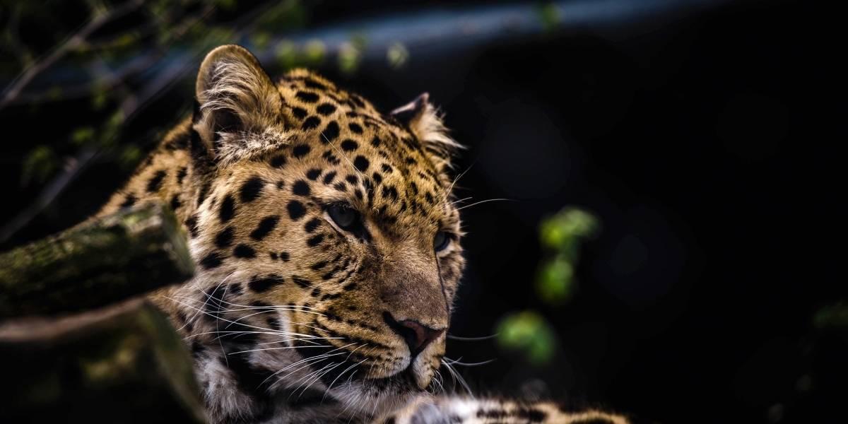 Anciana se salvó del ataque de un leopardo gracias a su bastón