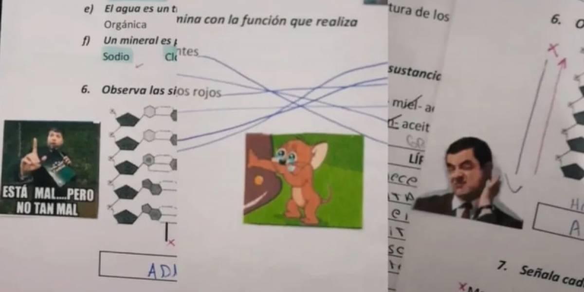 Maestra corrigió exámenes de alumnos con memes y enloqueció las redes sociales
