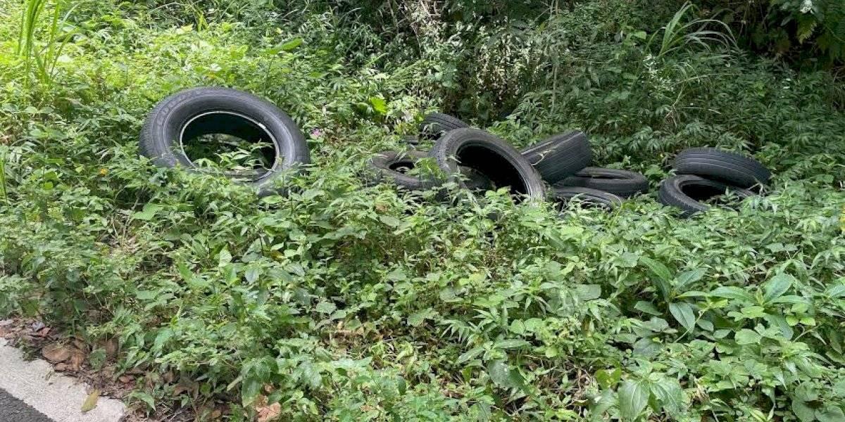 Denuncian problemas de basura y escombros en áreas de El Yunque