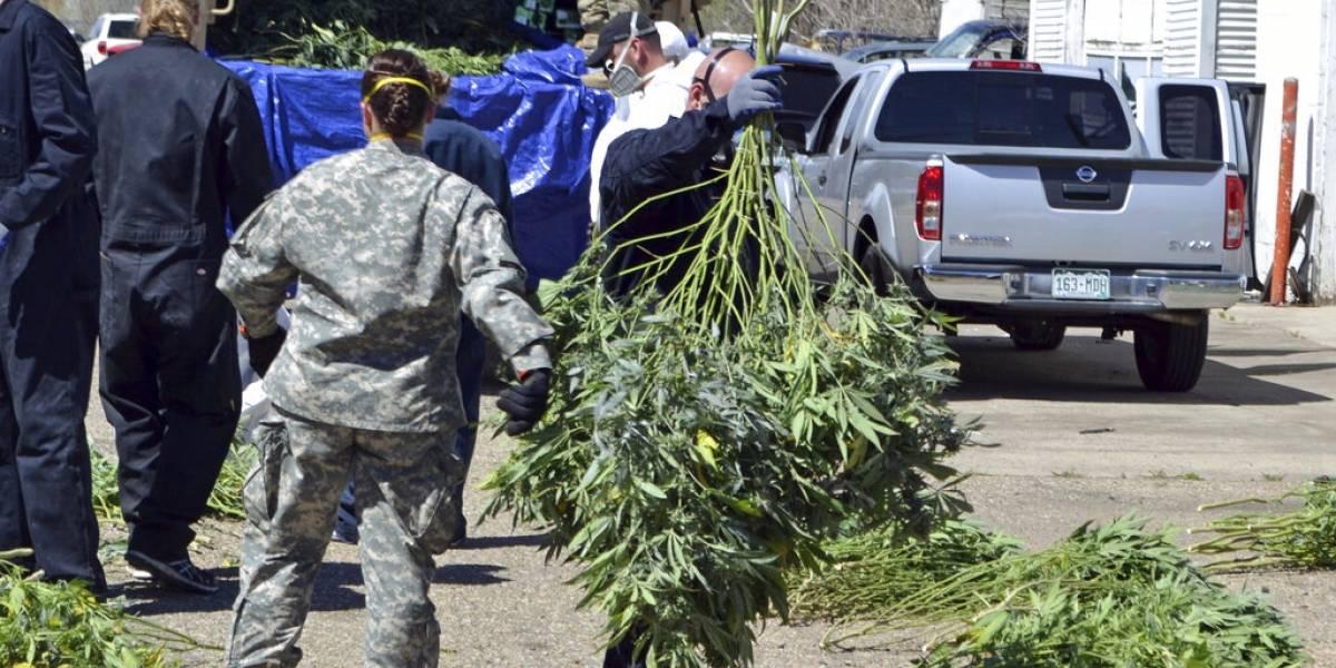 Oregon declara emergencia ante granjas ilegales de cannabis