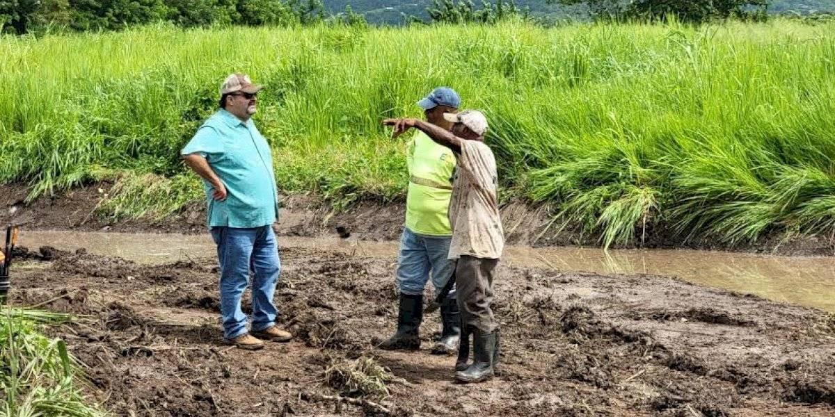 Comienza la limpieza de terrenos en Maunabo