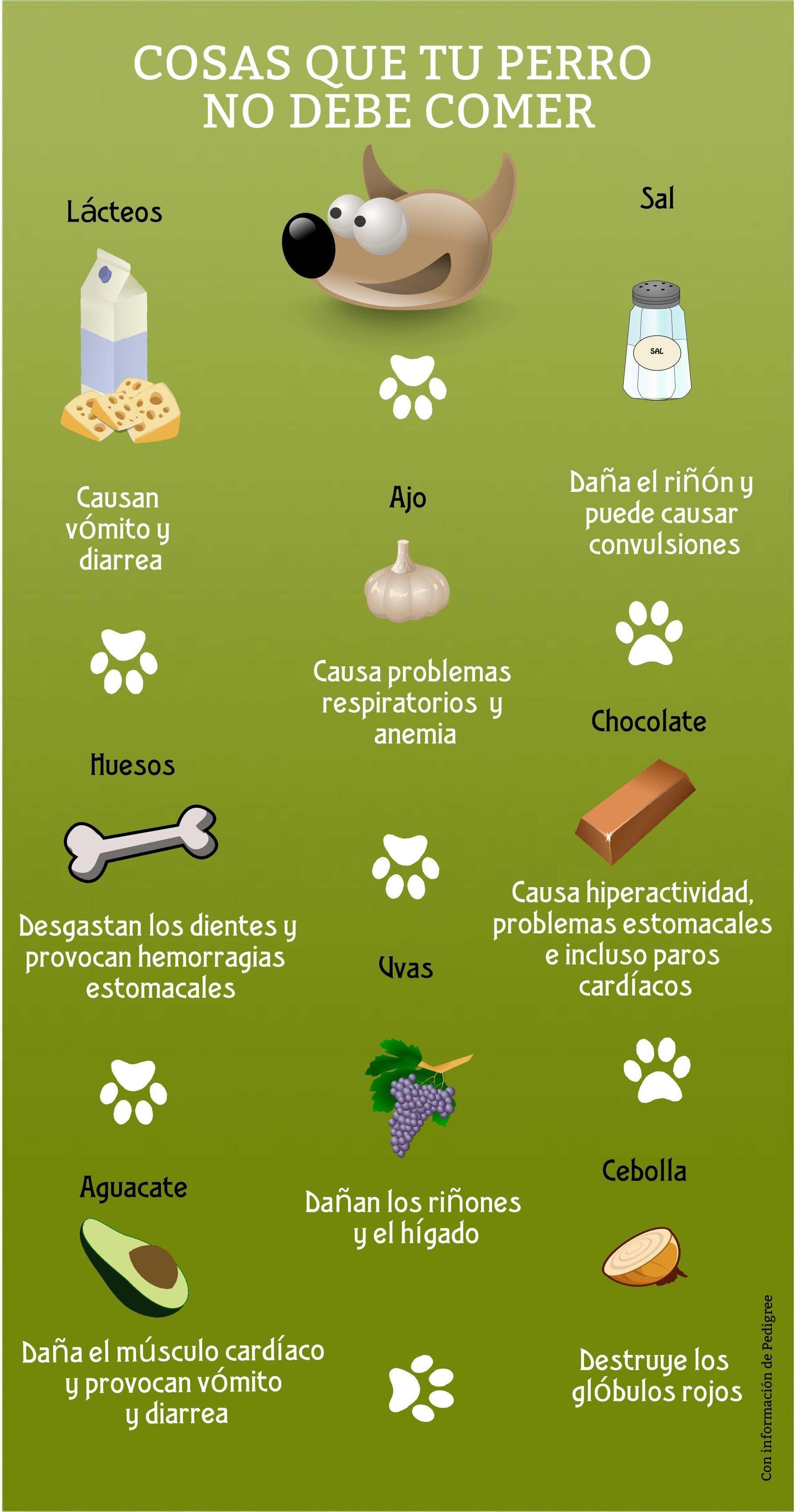Resultado de imagen para los perros no deben comer chocolate