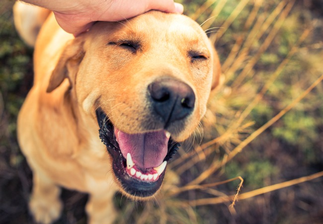 Resultado de imagen para perros felices
